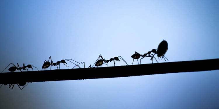 Kültür Karıncaları 2010'a Yürüyor